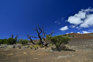 Am Mauna Kea bei 10'000 Fuss