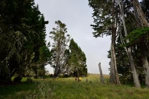 Camp, ehemalige Schafscherstation